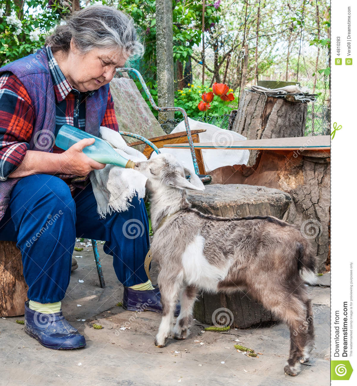 Farmer Feeding A Baby Goat With A Milk Bottle Stock Image
