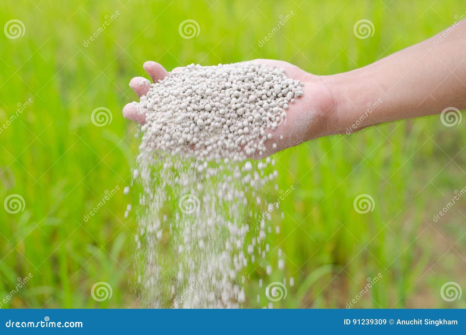 Farmer hand pouring plant chemical fertilizer