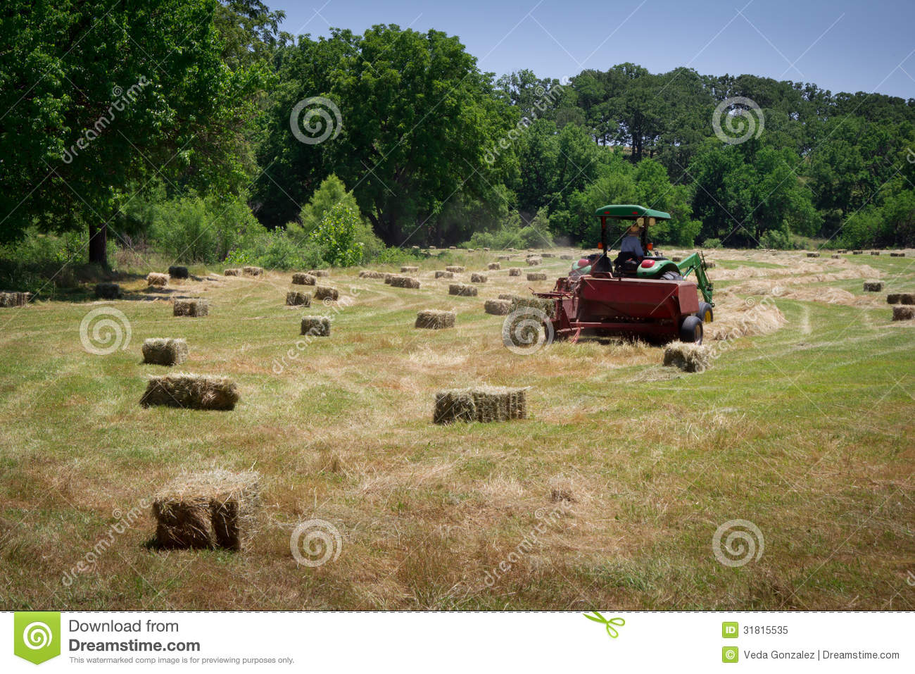 Hay Farmer Tractor Cartoon : Farmer haying field royalty free stock image