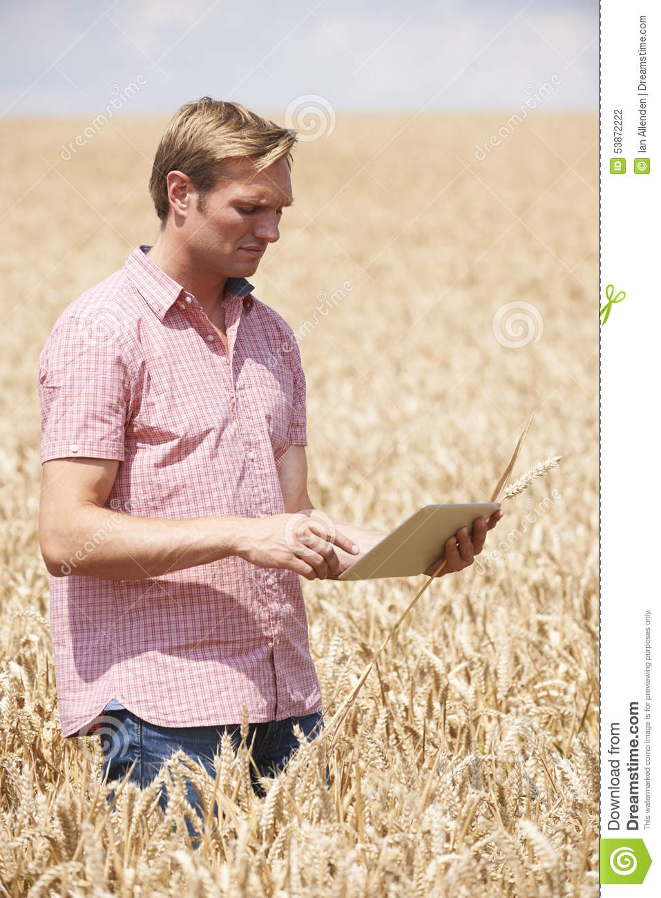 Farmer Inspecting Crops In Field Using Digital Tablet