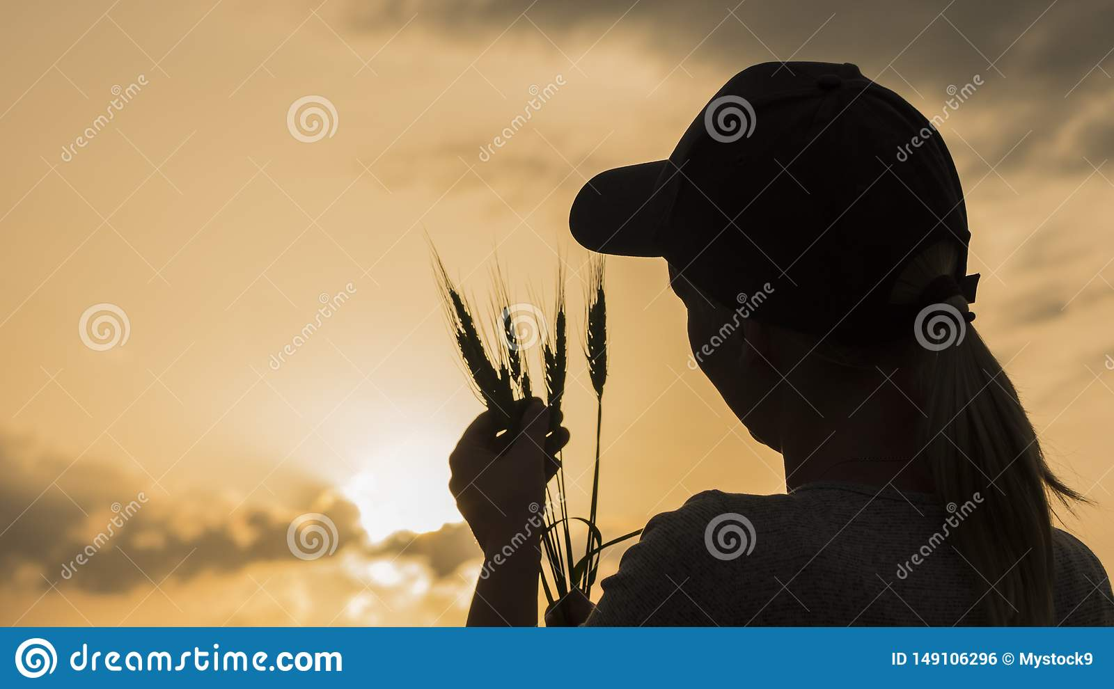 Farmer looks at the ears of wheat, rear view