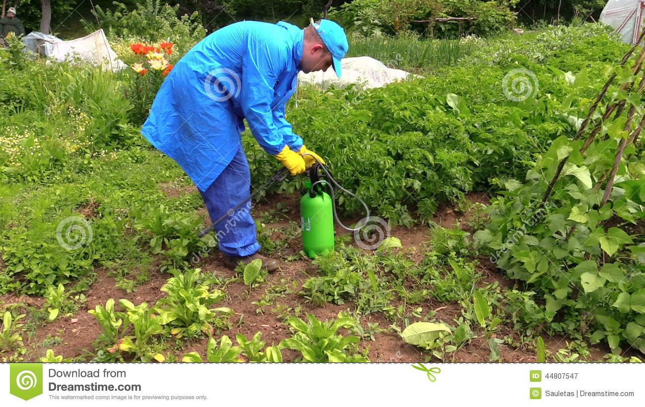 Farmer Man Spray Fertilize Pesticides Chemical On Plants Stock