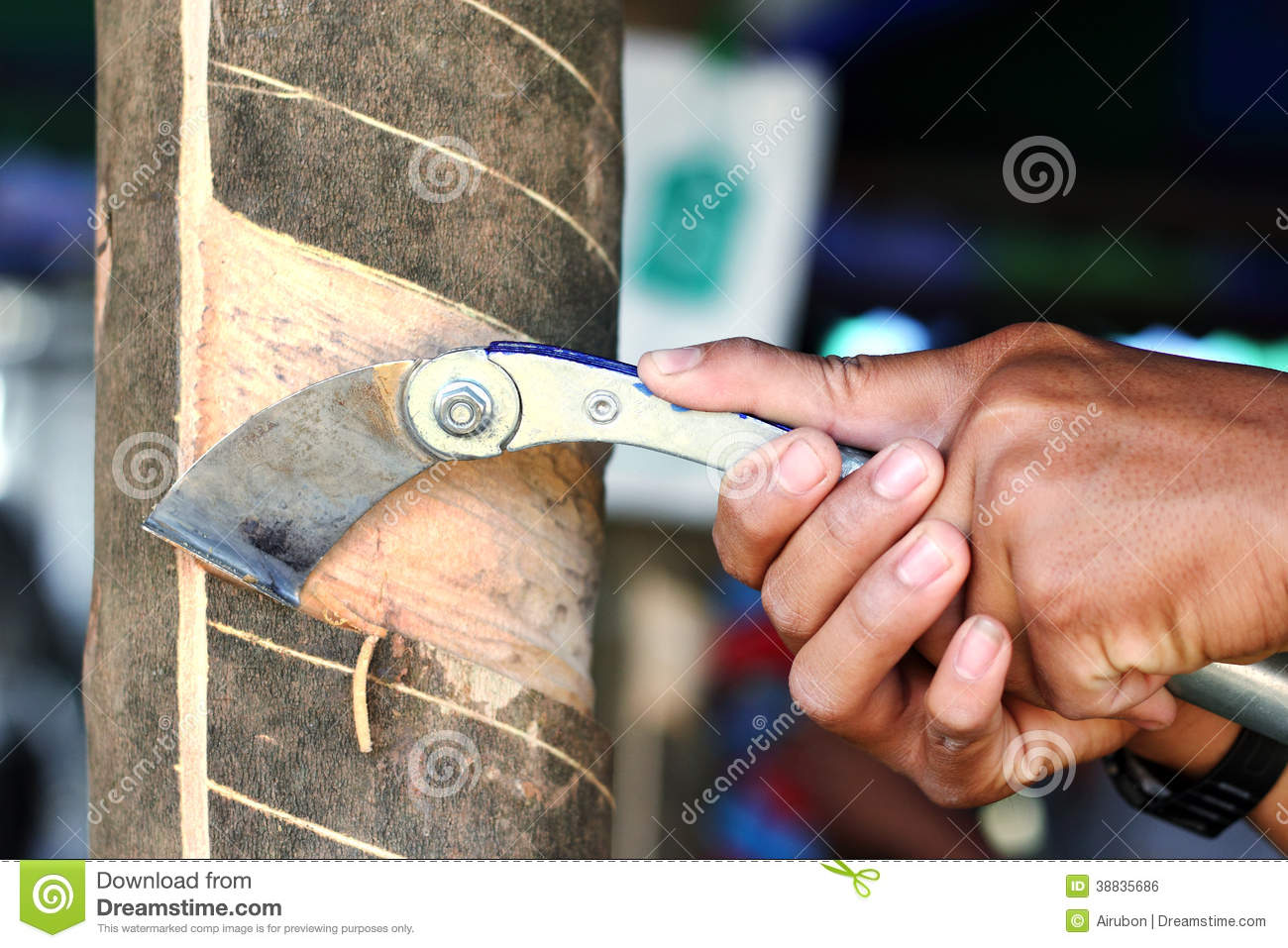 Farmer Rubber Tapping Stock Photo Image 38835686