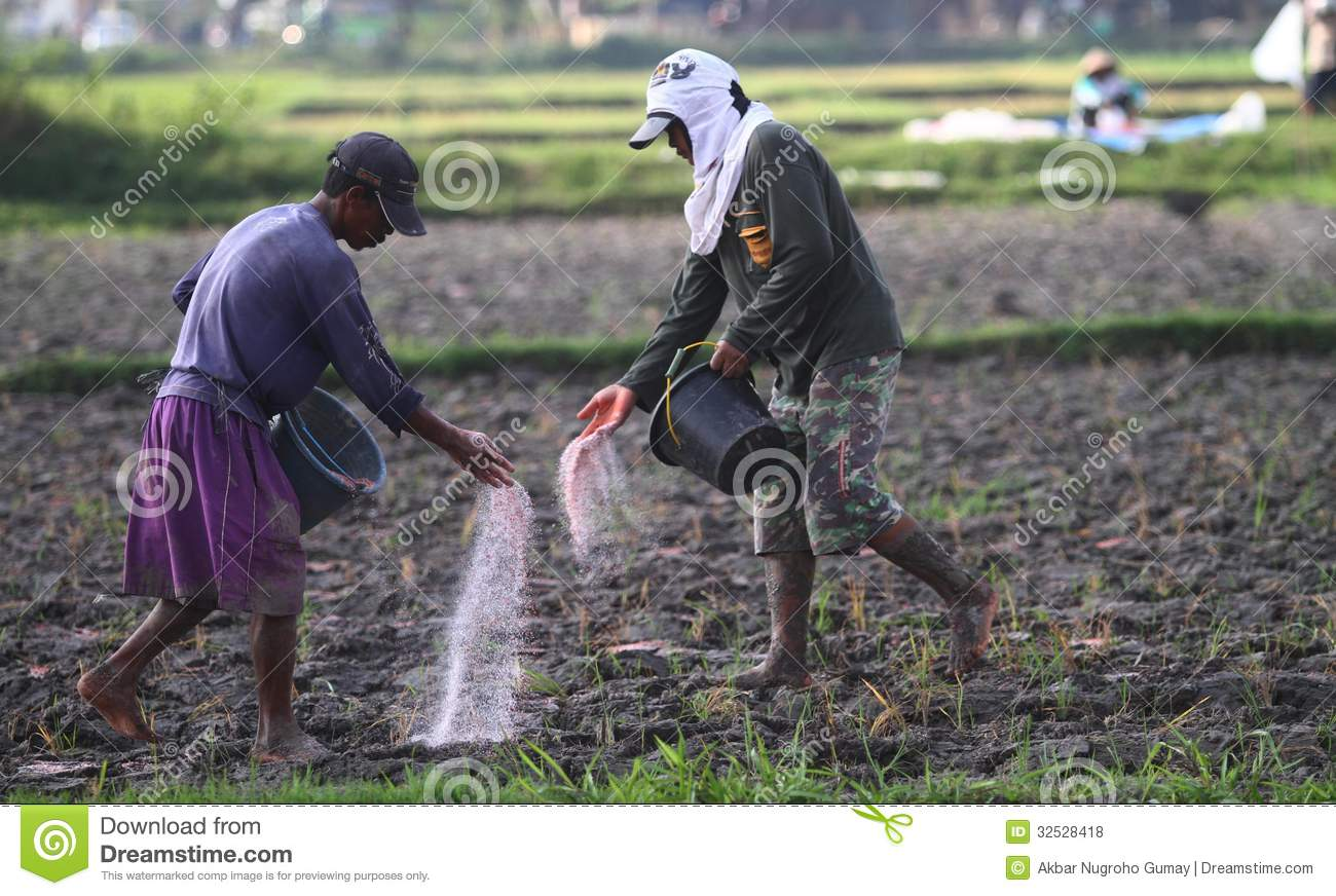 Farmer throwing fertilizer