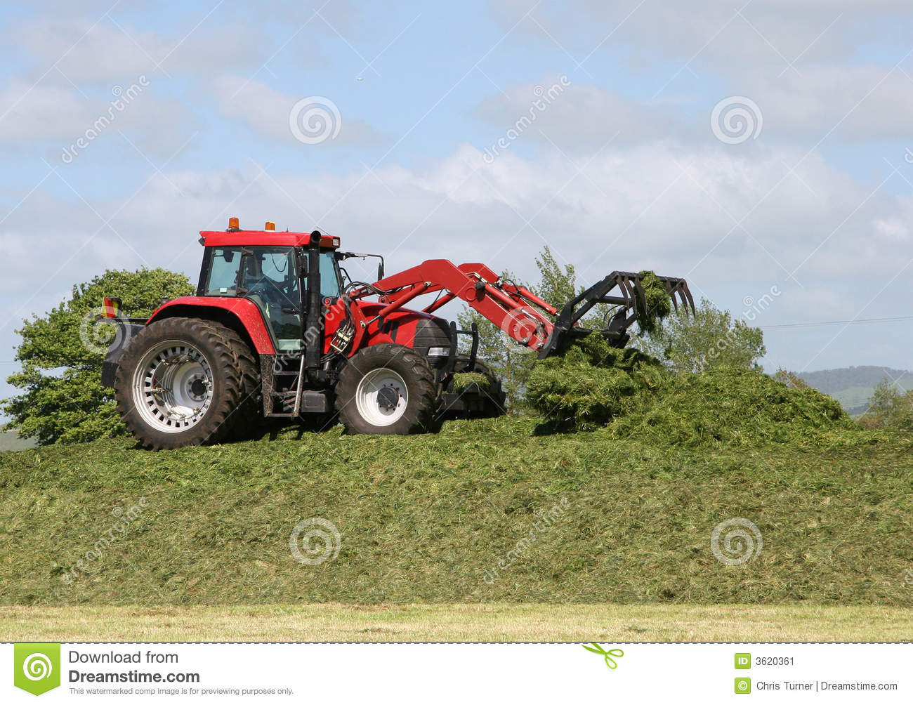 Farmer On Tractor : Farmer on tractor packing down silage stack stock image