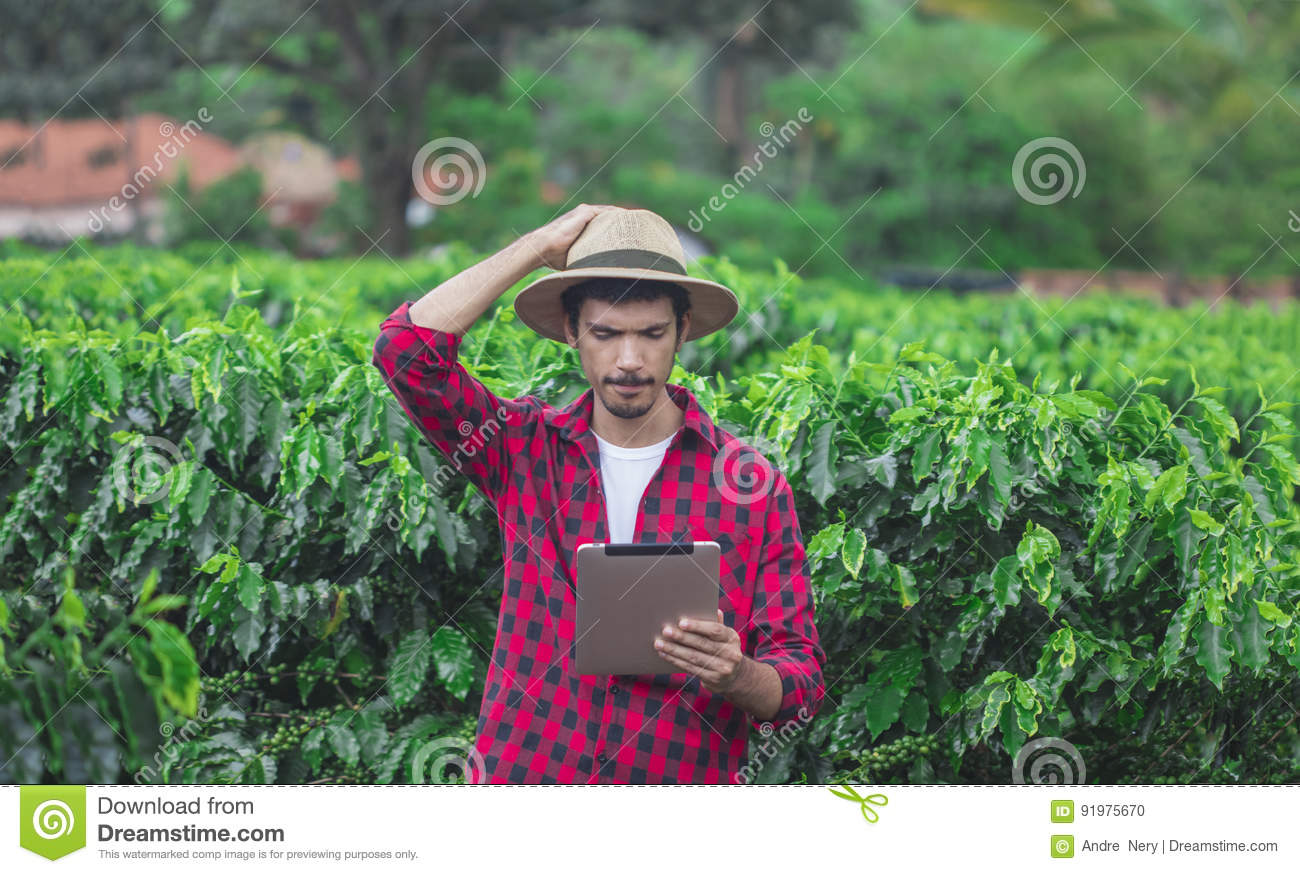 Farmer Using Digital Tablet Computer In Cultivated Coffee Field Plantation Modern Technology Application Agricultural Growing Activity Concept Image