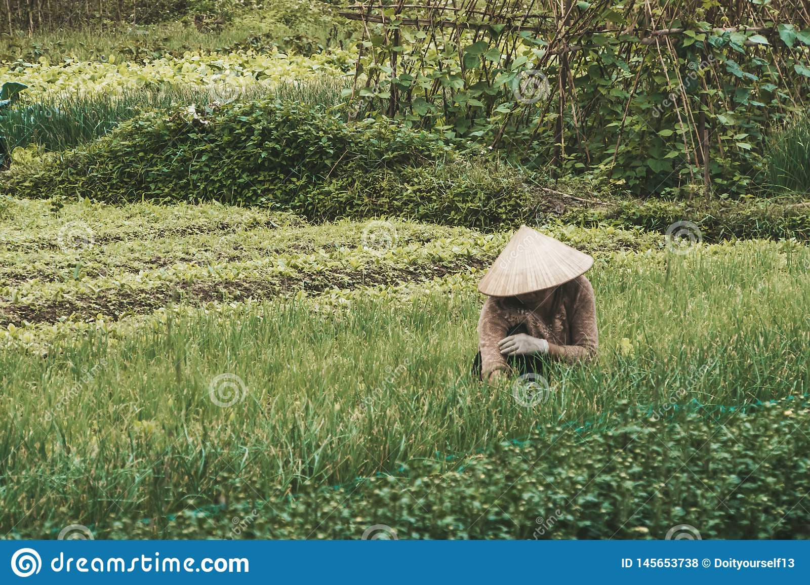 Farmer wearing traditional Vietnamese hat on field in Vietnam. Worker doing agriculture work in plant. Life of a man or woman on