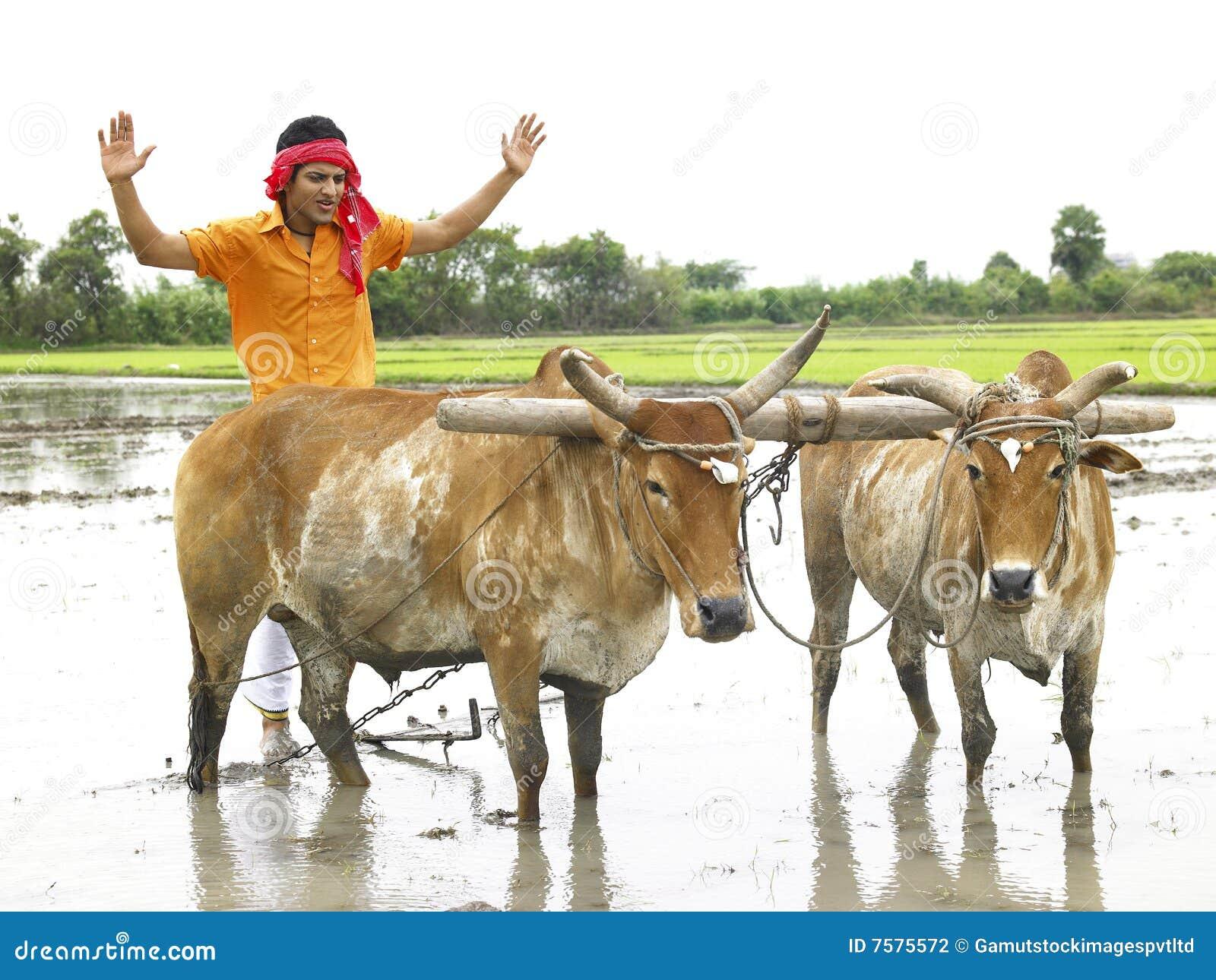 Indian Farmer Clipart ...