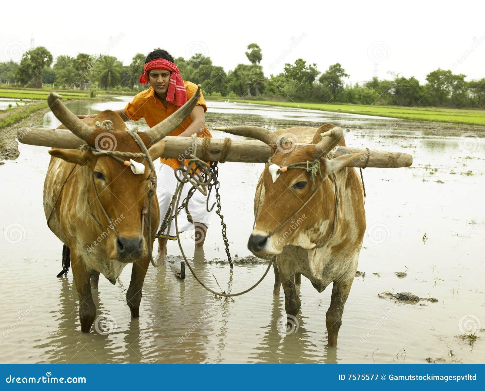 essay on a farmer