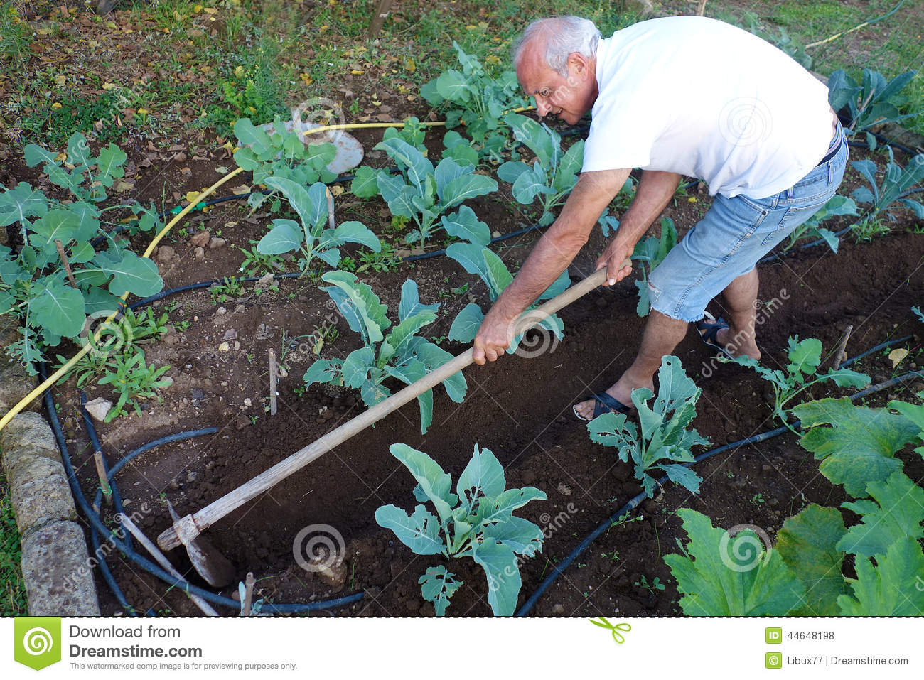 Farmer Working Hoeing Ground Vegetable Garden