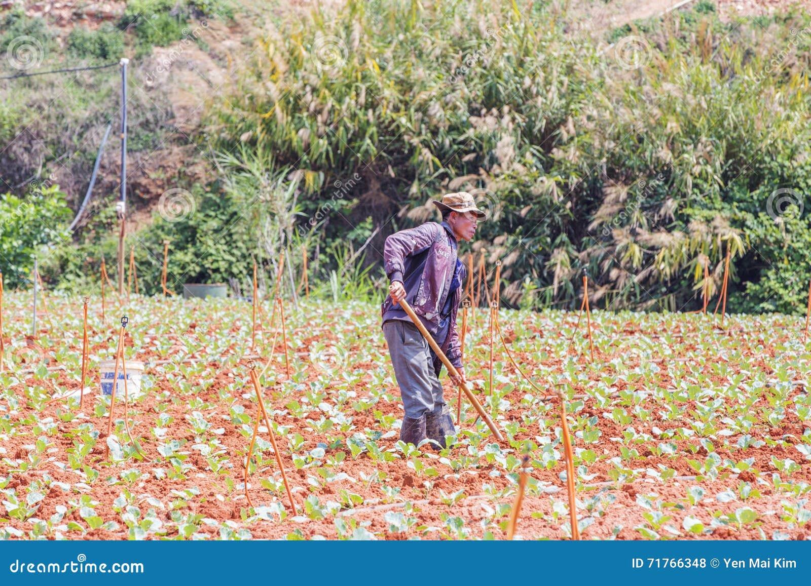 Farm Labor Shortages