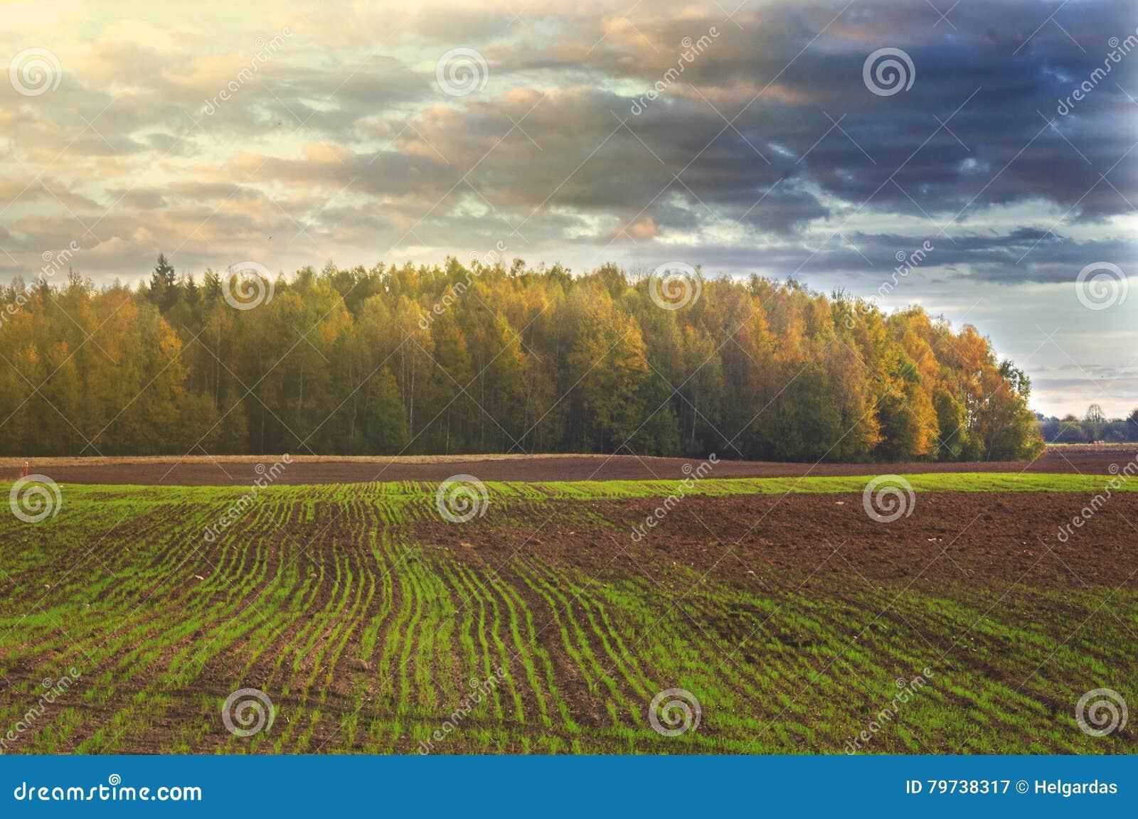 Farmfield y un bosque en un fondo, Lituania