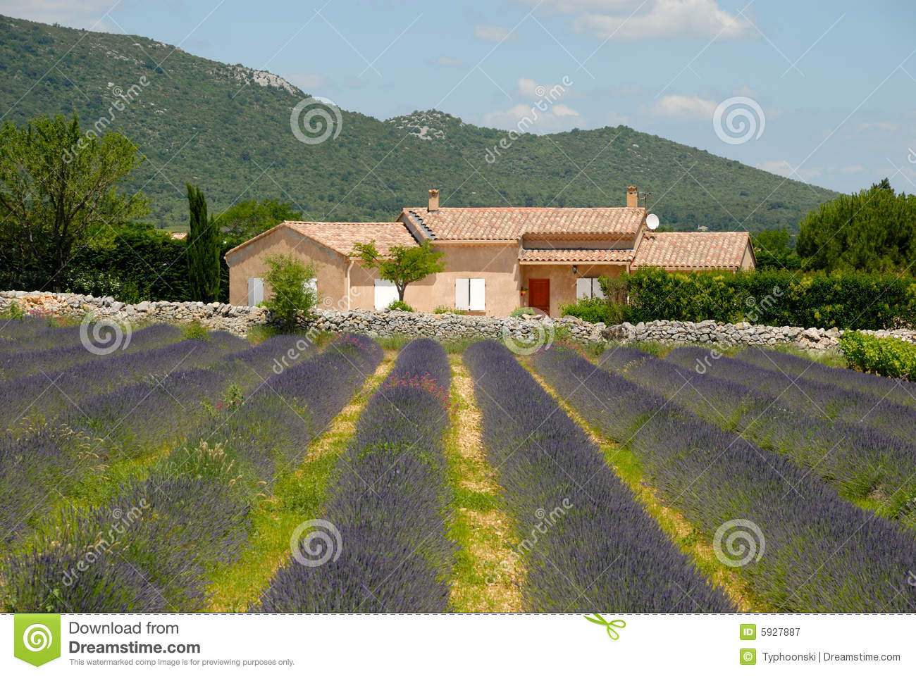 Farmhouse and lavender field in France