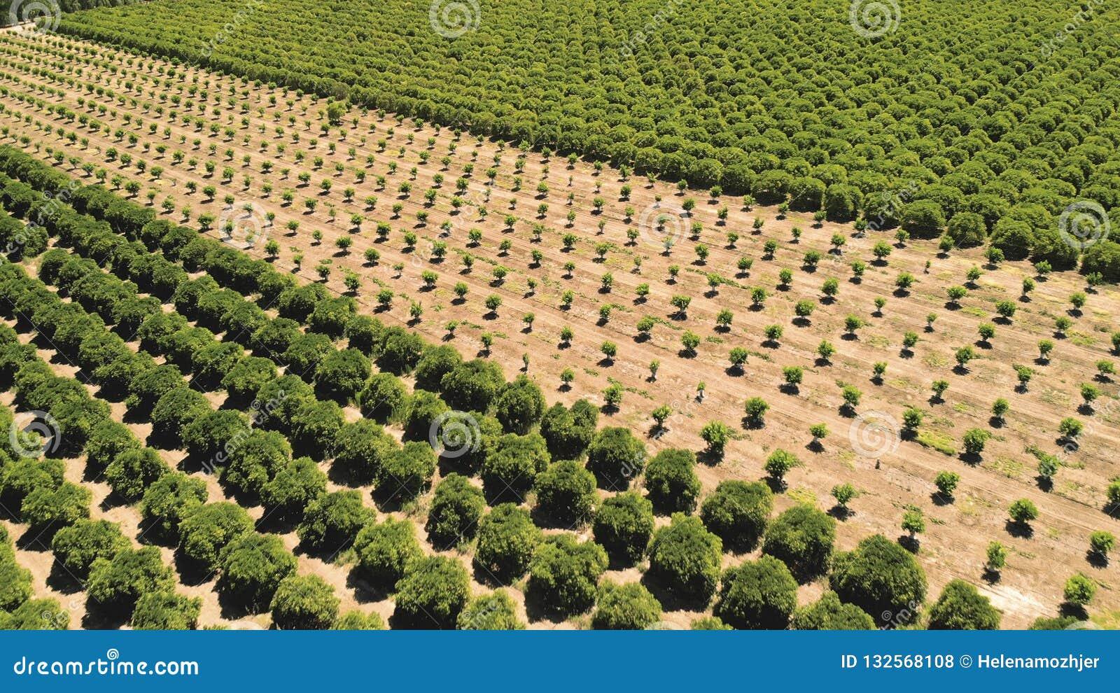 Farming Fruta y verdura creciente agrícola c de la tierra de cultivo