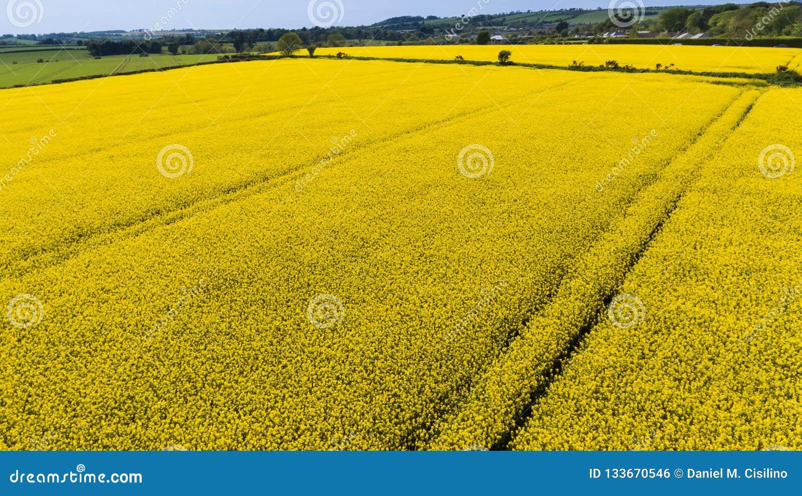 Farming Koolzaad, Canola, Biodieselgewas ierland
