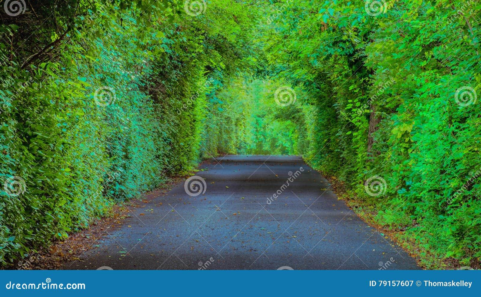 Farmington-Plantagen-bewaldeter Weg, Louisville Kentucky