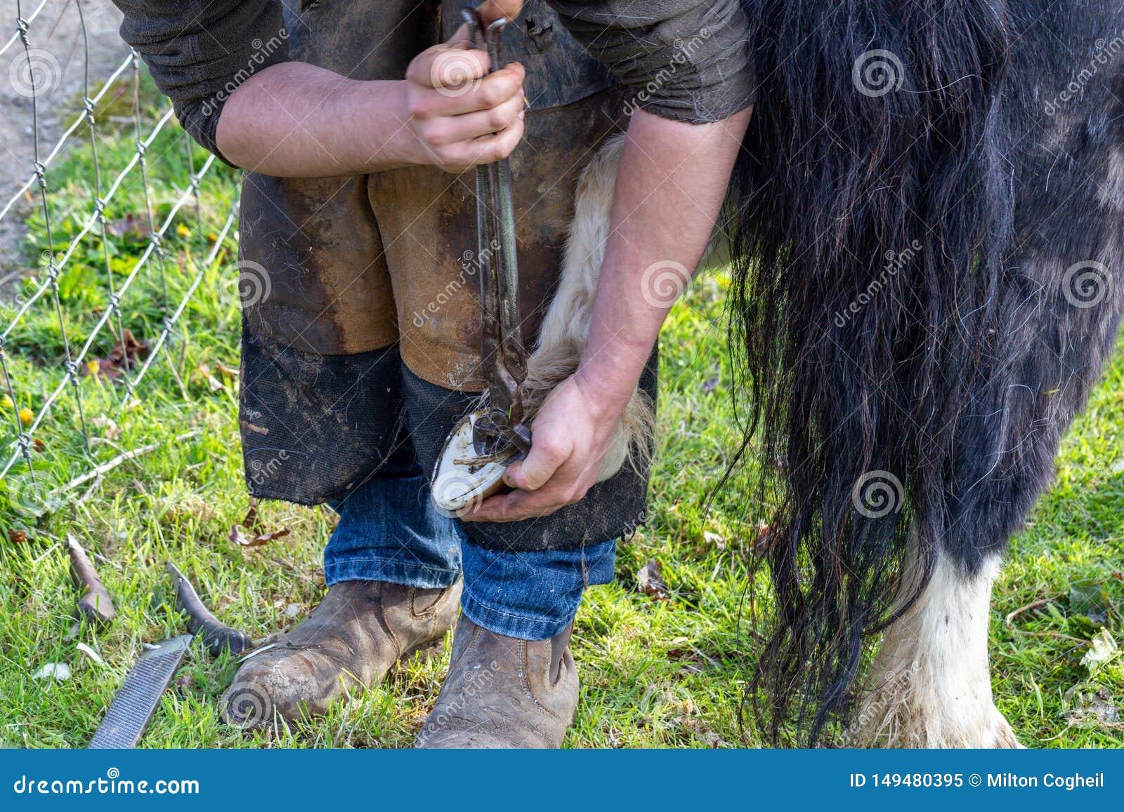 Farrier que trabalha nos cascos de um p?nei de Shetland