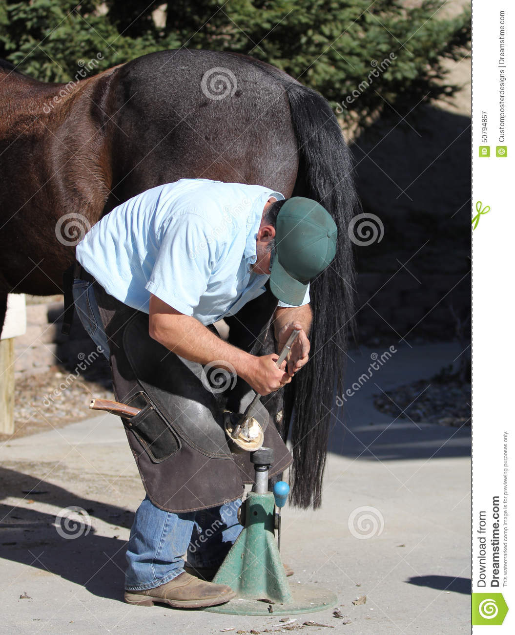Download A Farrier Trimming A Horse Hoof. Stock Image - Image of filing, flexor: 50794867