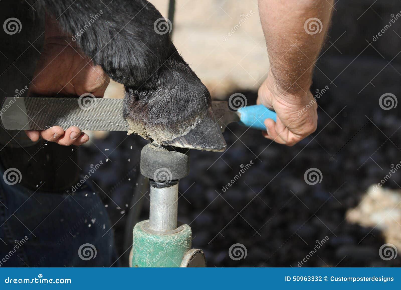 A farrier trims a barefoot horse.