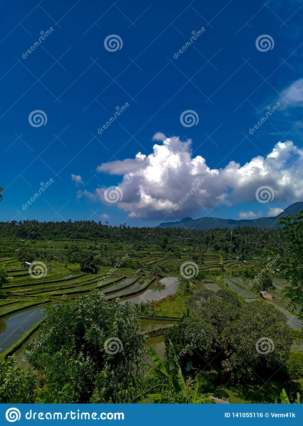 Beautful View On Rice Terraces In Bali Island Stock Photo Image Of China Farm 141055116
