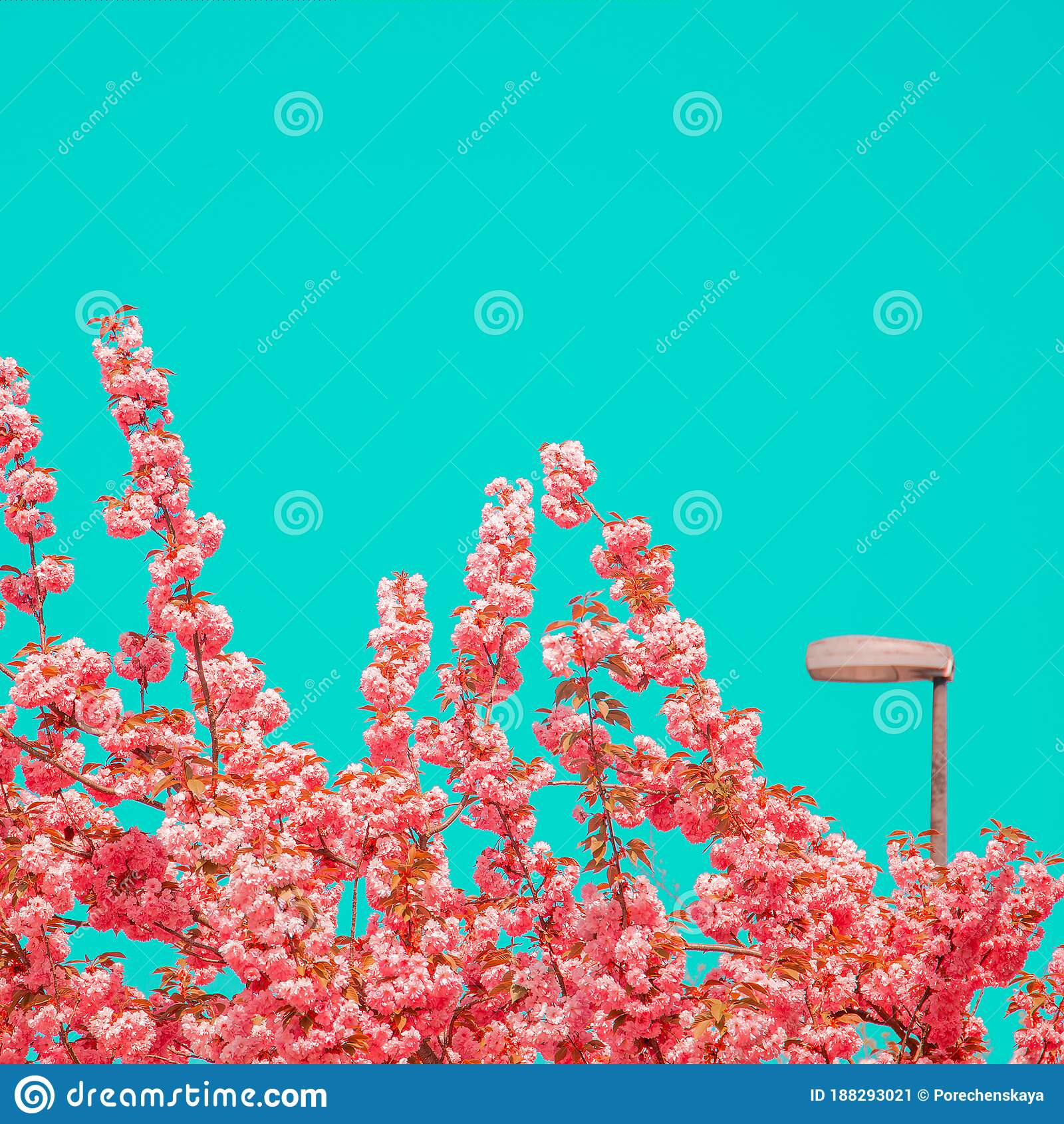 fashion aesthetics street pink flowers cherry blossom wallpaper tree 188293021