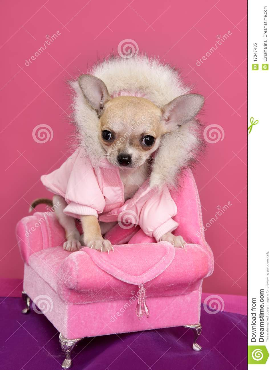 Fashion Chihuahua Dog Barbie Style Pink Armchair Royalty