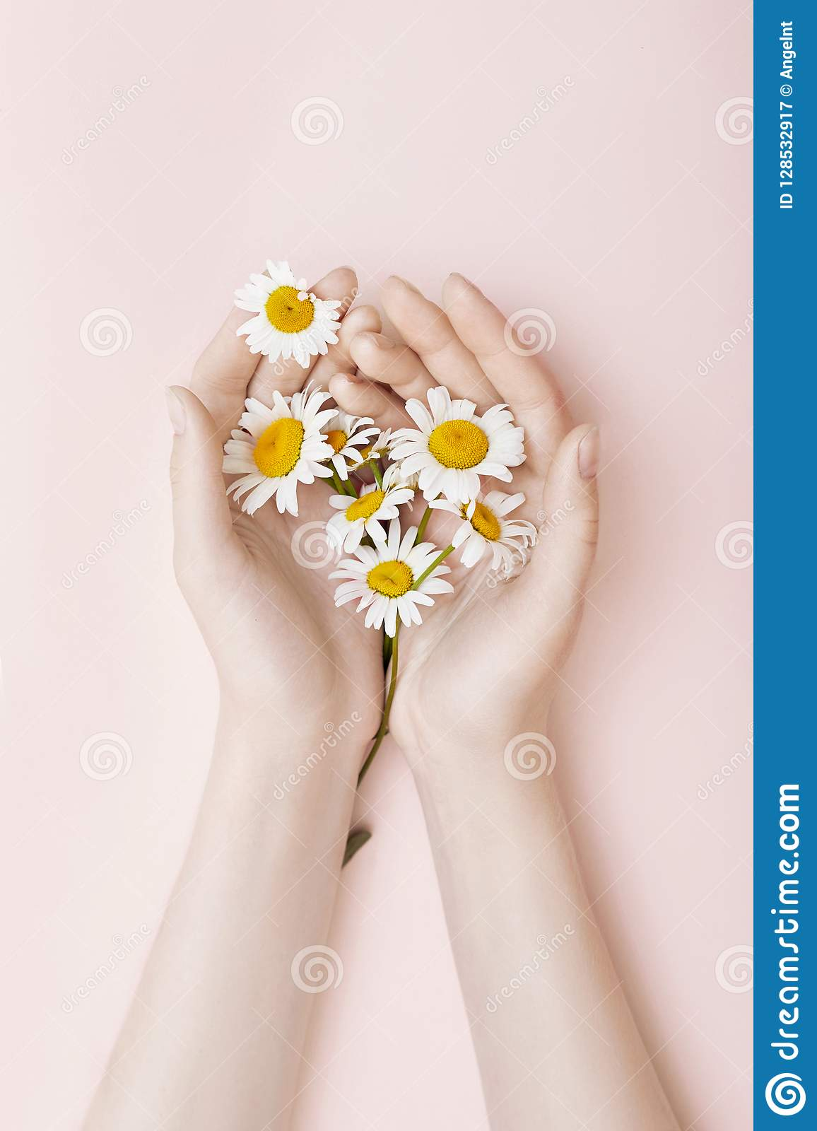 Fashion hand art chamomile natural cosmetics women, white beautiful chamomile flowers hand with bright contrast makeup, hand care