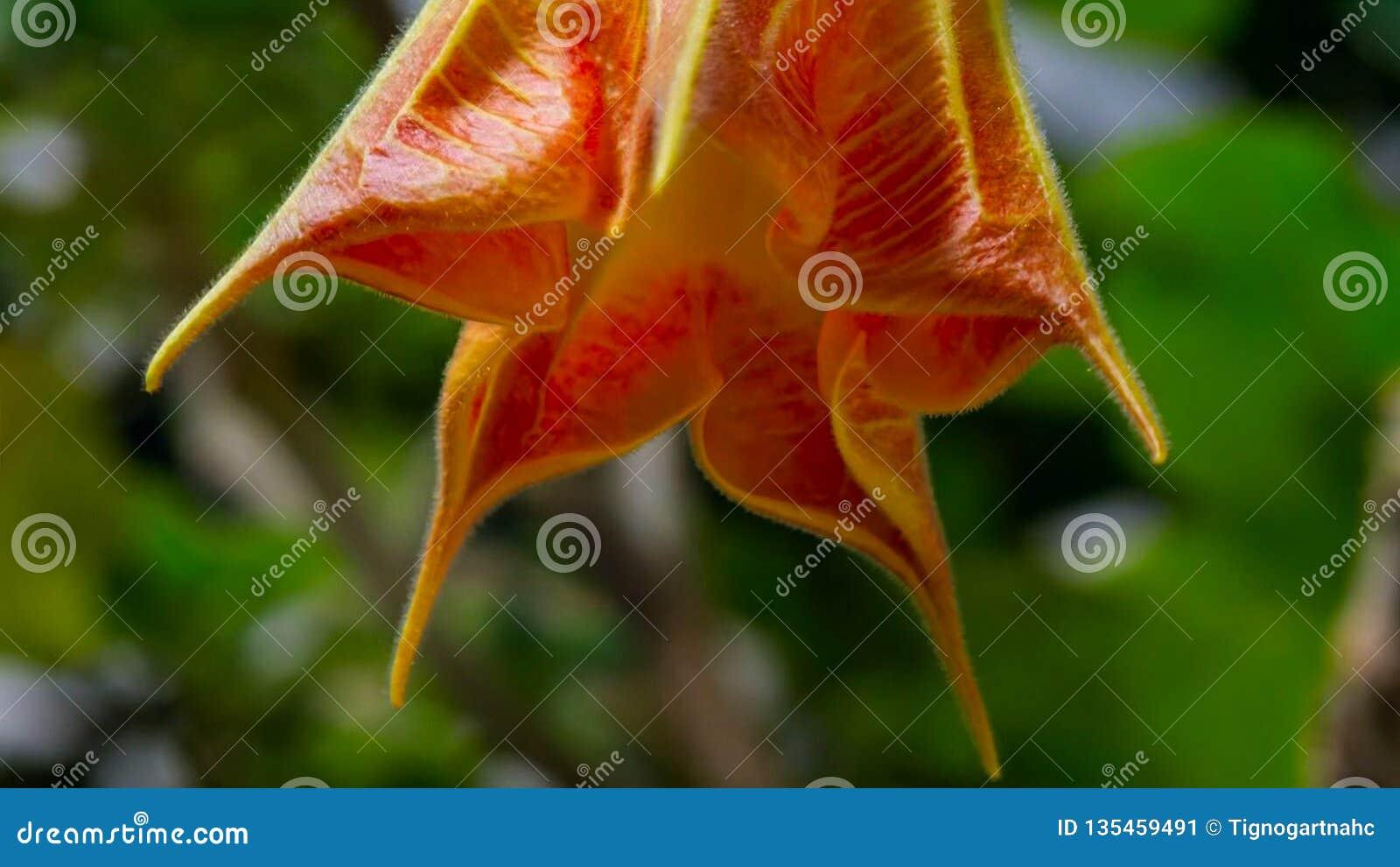 Fasi di crescita e di fioritura Concetto di fioritura