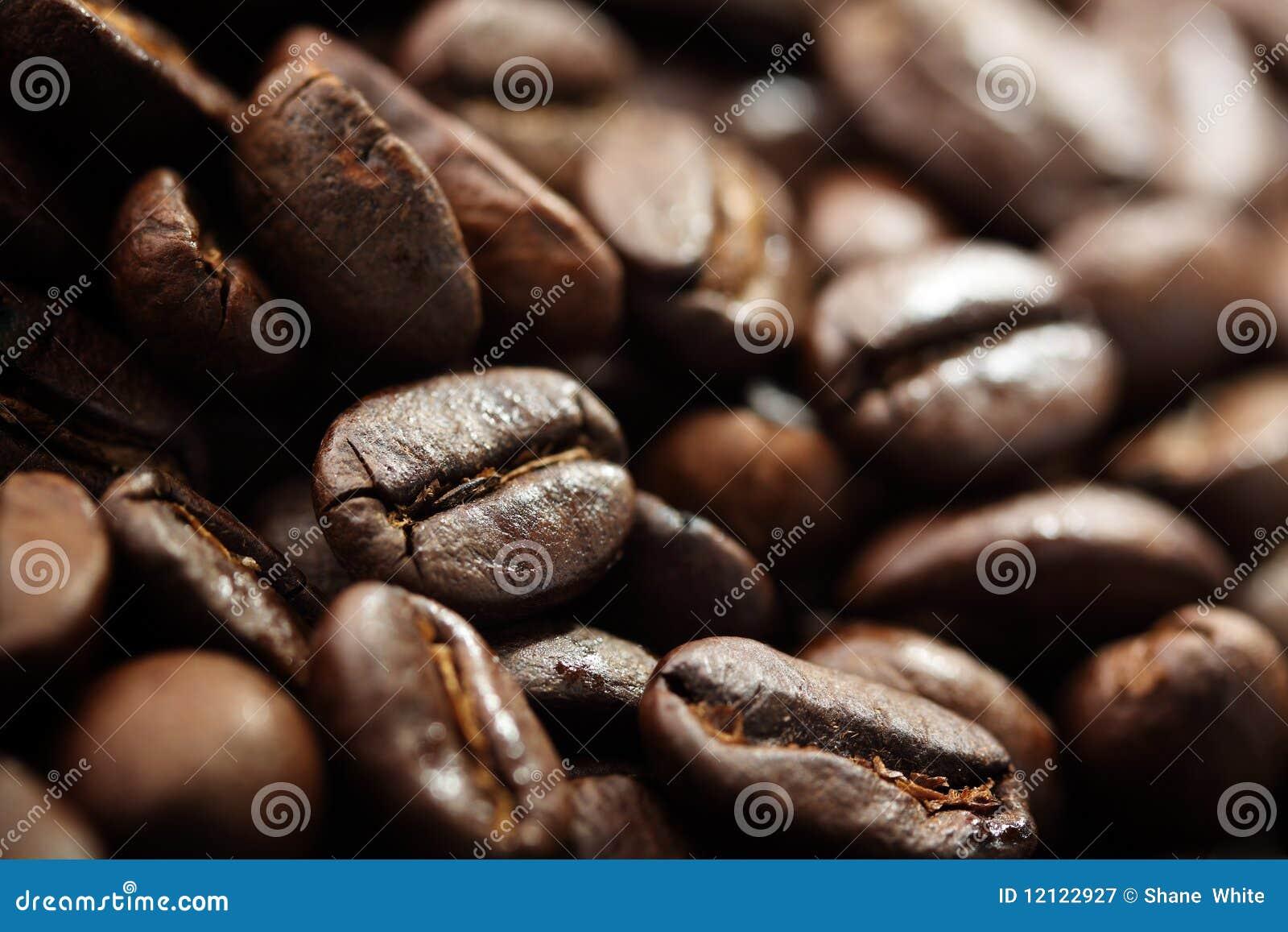 Fasole kawowe