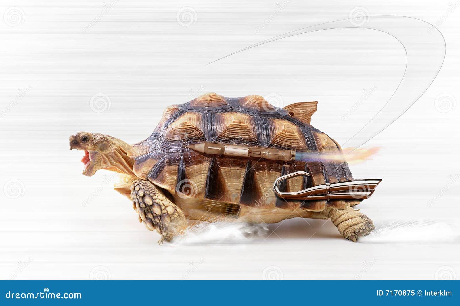 fast-turtle-7170875.jpg