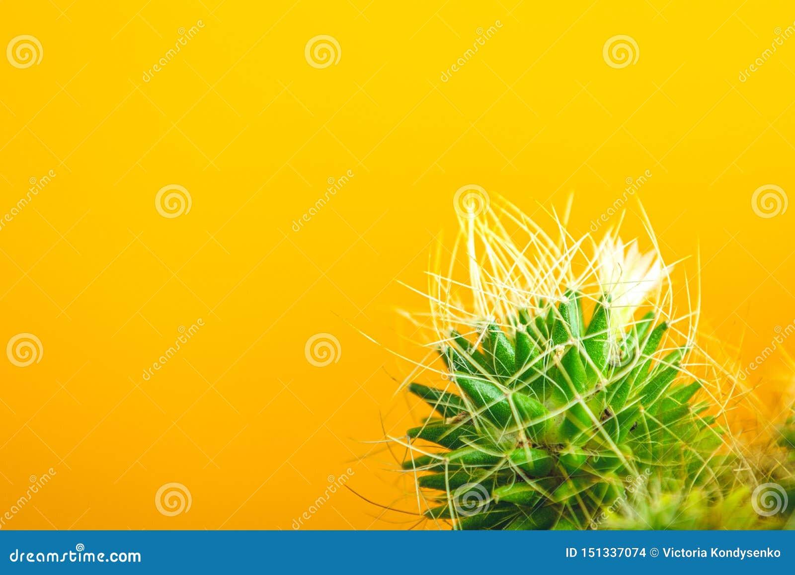 Fastställd design för tropiskt kaktusmode