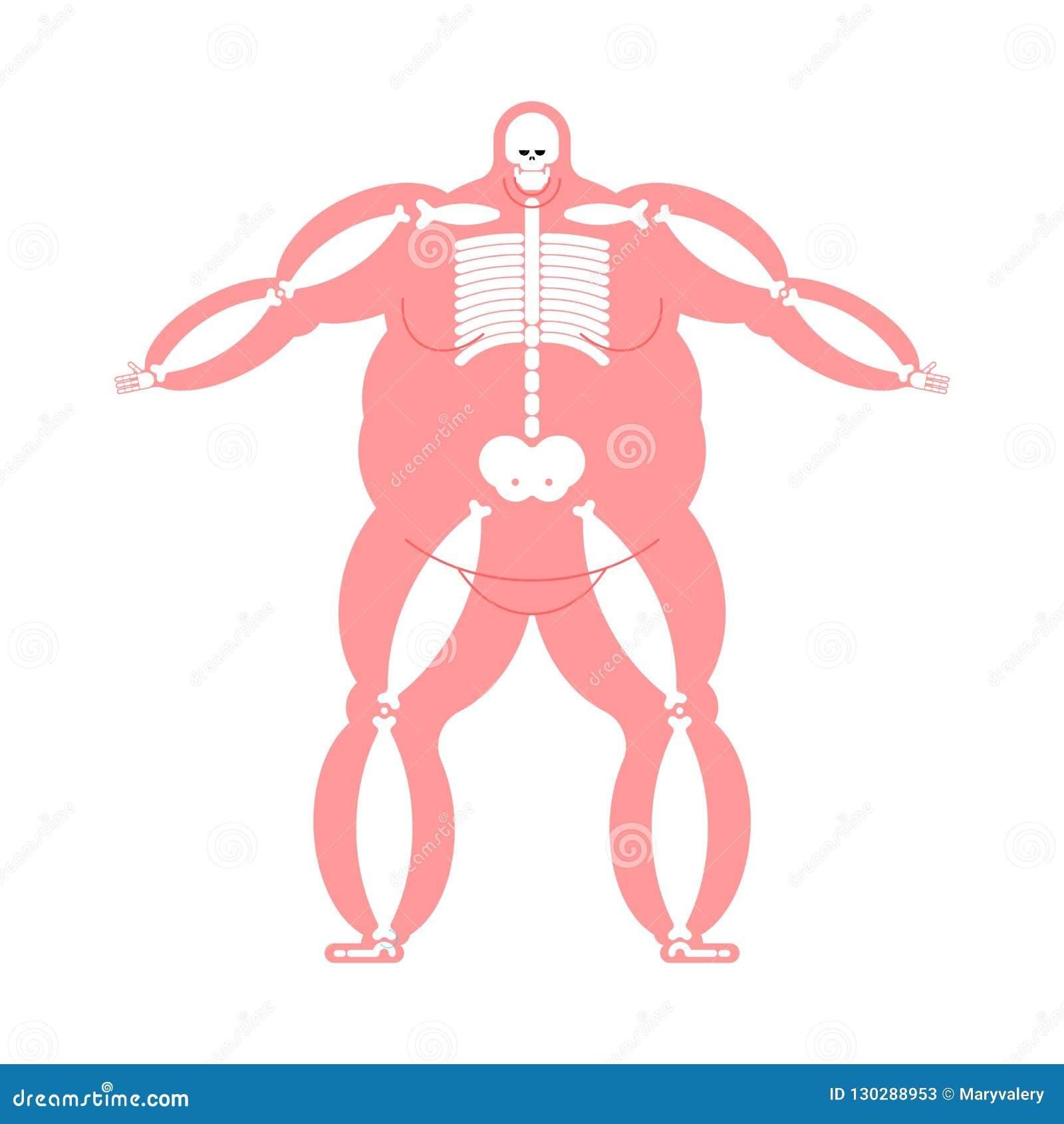 Fat Body Anatomy Skeleton Wide Bone Fat Man Skeletal System Vector