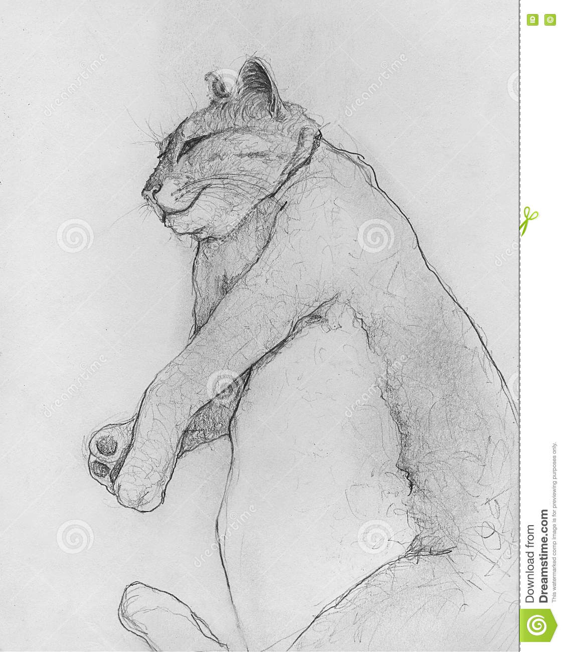 This is an original hand drawn pencil sketch of a large cat rolled over on his side squinting in a sleepy daze
