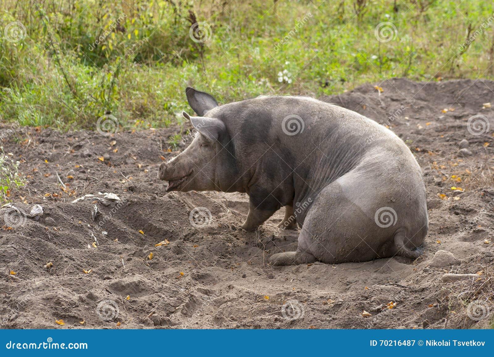 Dirtiest fat anal pig