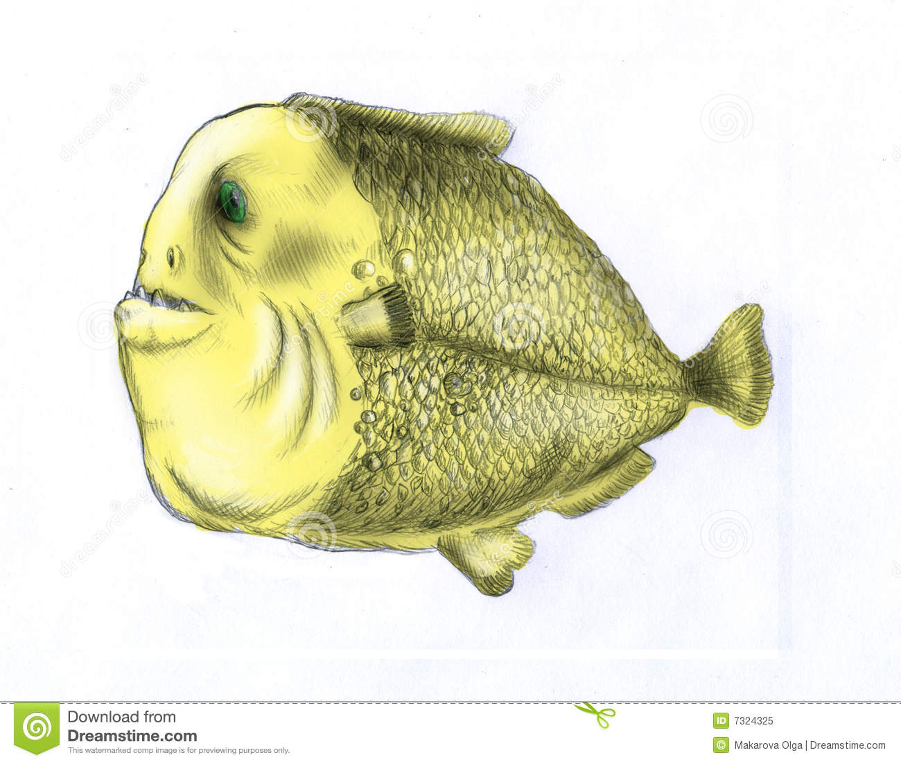 Fat piranha fish color stock illustration image of for What are fatty fish