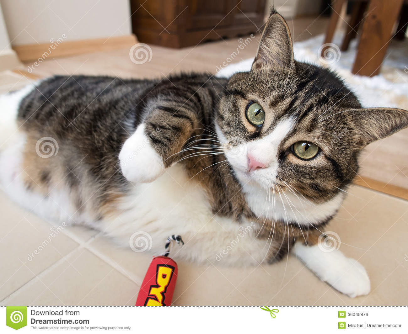 Lazy Baloo 100456735 also 16738916 together with Fat Albert Boy Into Big Boy 361536757 as well Page 9 furthermore Royalty Free Stock Image Fat Tabby Cat White Furs Lying Wood Ground Image36045876. on fat furs 3