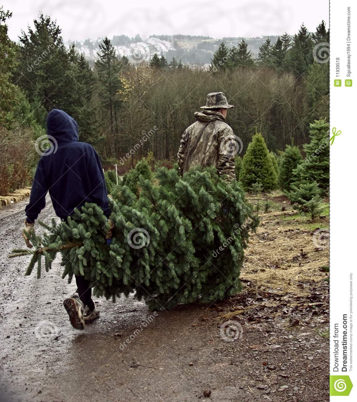 how to carry your christmas tree pick