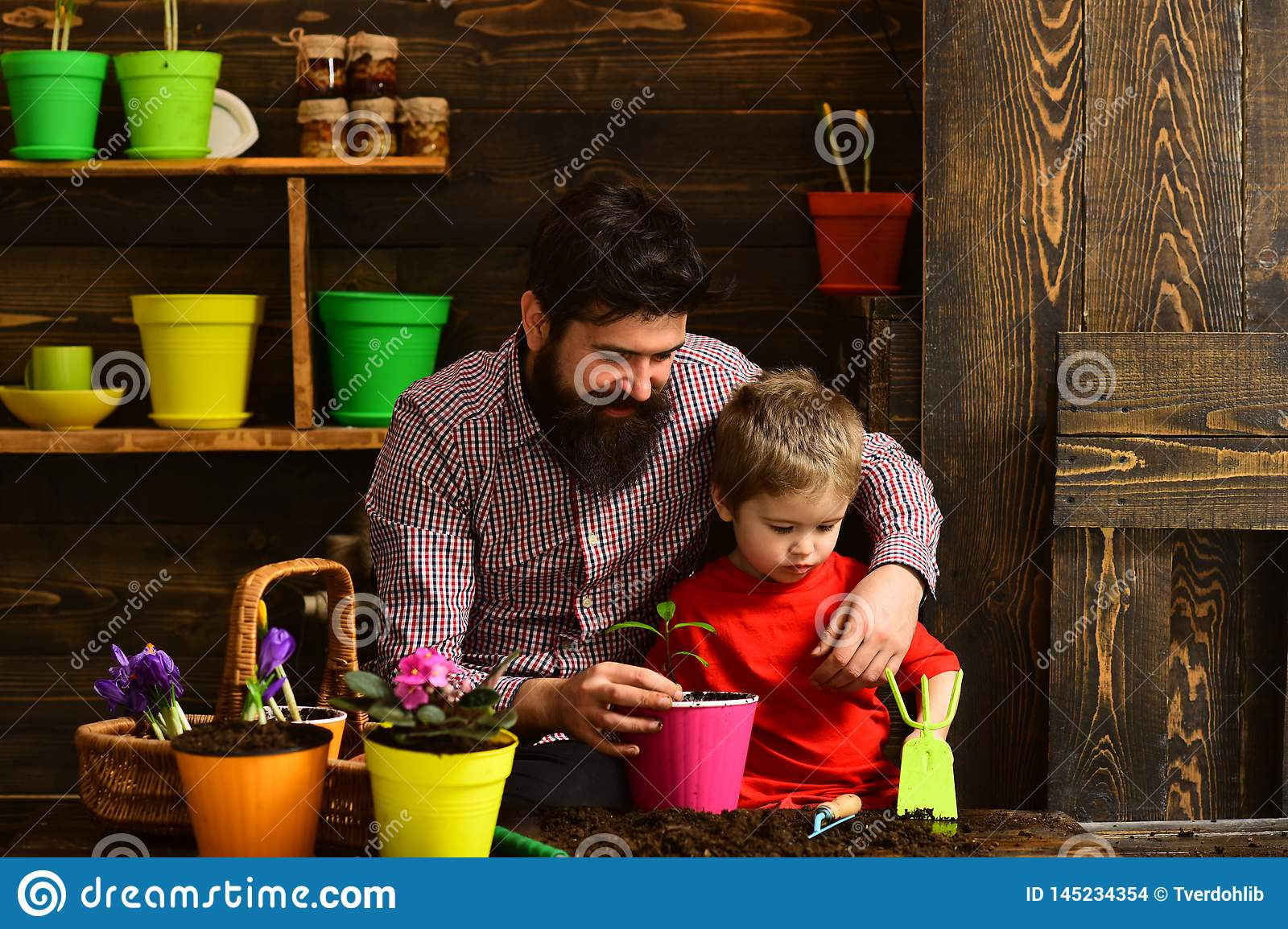 Father and son. Family day. Greenhouse. happy gardeners with spring flowers. Flower care watering. Soil fertilizers