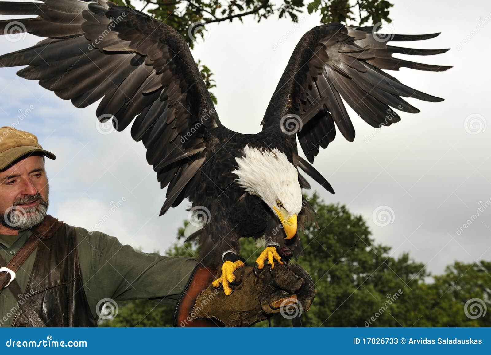 Fauconnier avec l aigle chauve