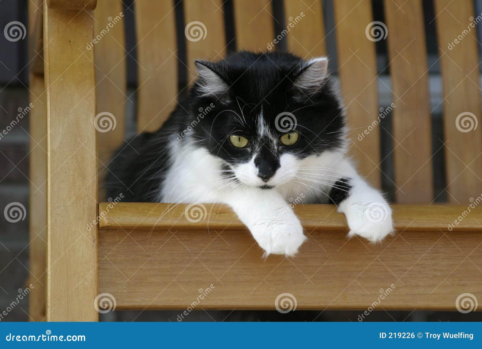 Faule Katze, die in einem Schwingstuhl stillsteht