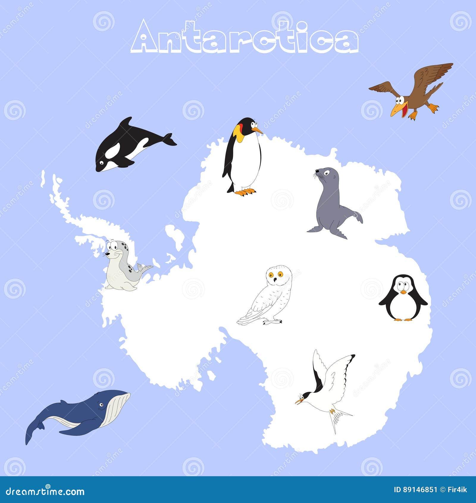 antarctic animals for kids - photo #19