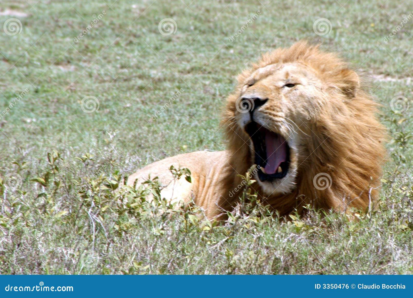 Fauna en Tanzania