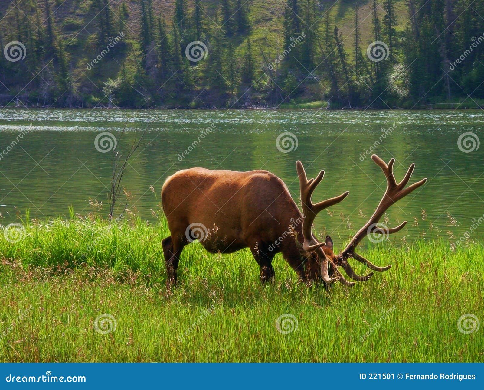Fauna selvatica americana