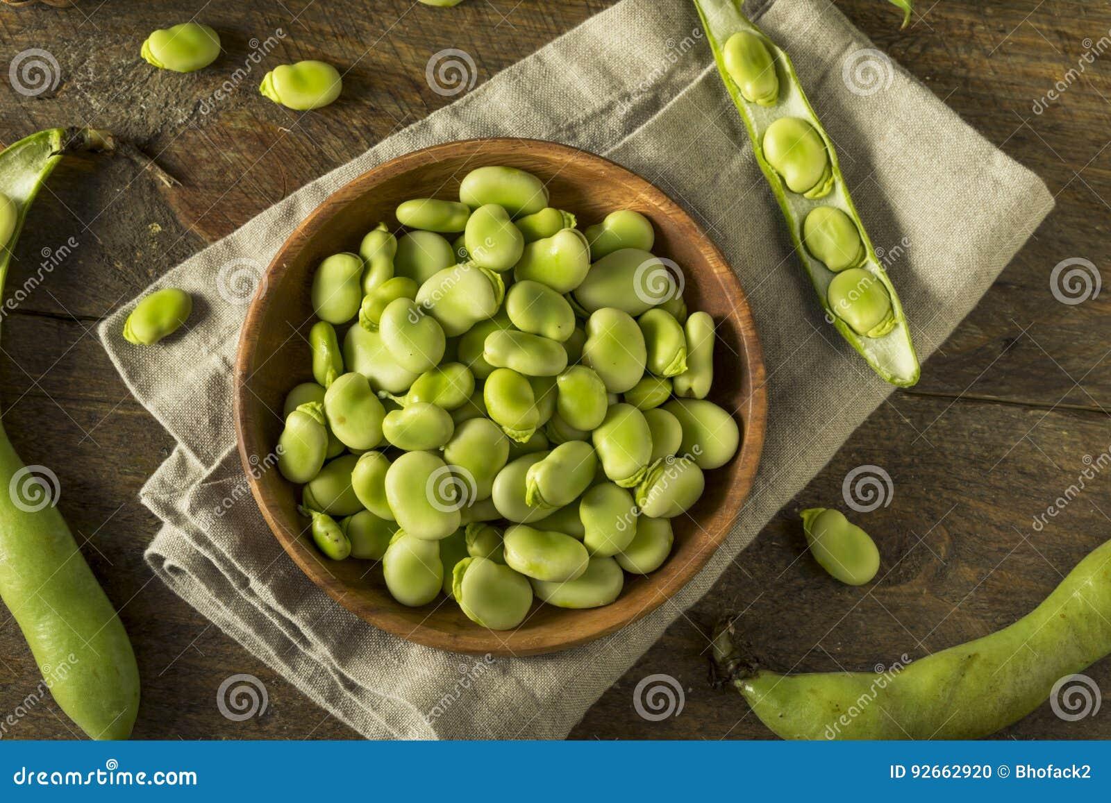 Fava Beans verte fraîche organique crue