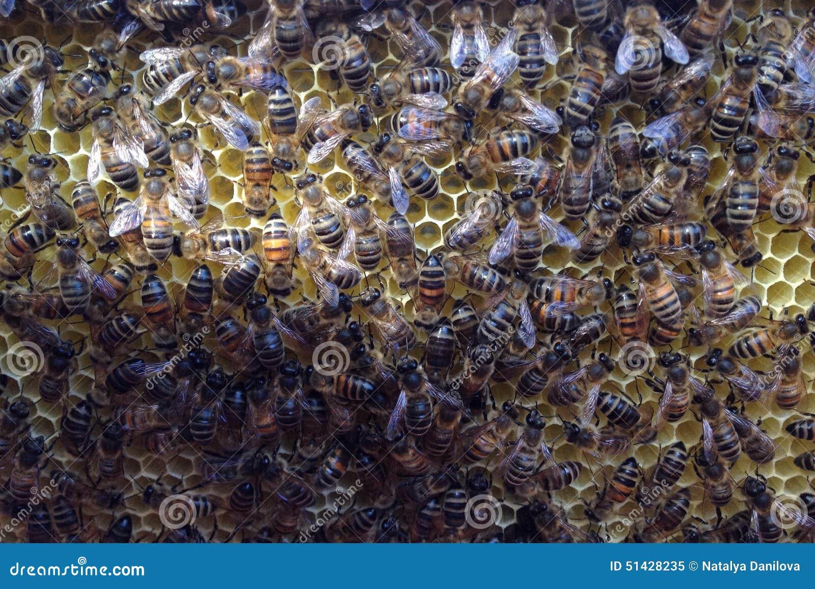 Favi di configurazione delle api in un alveare
