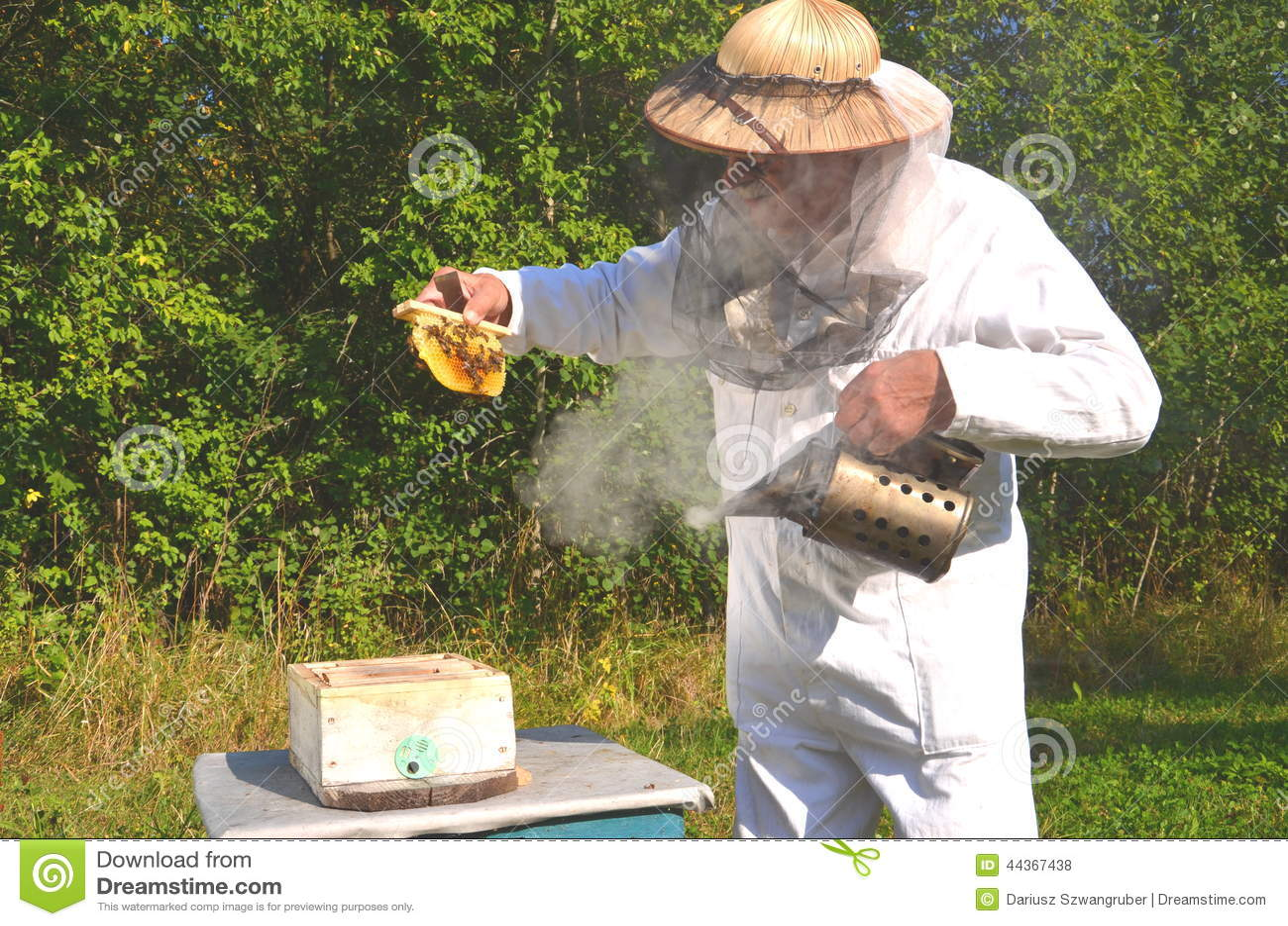 Favo senior con esperienza della tenuta dell apicoltore per
