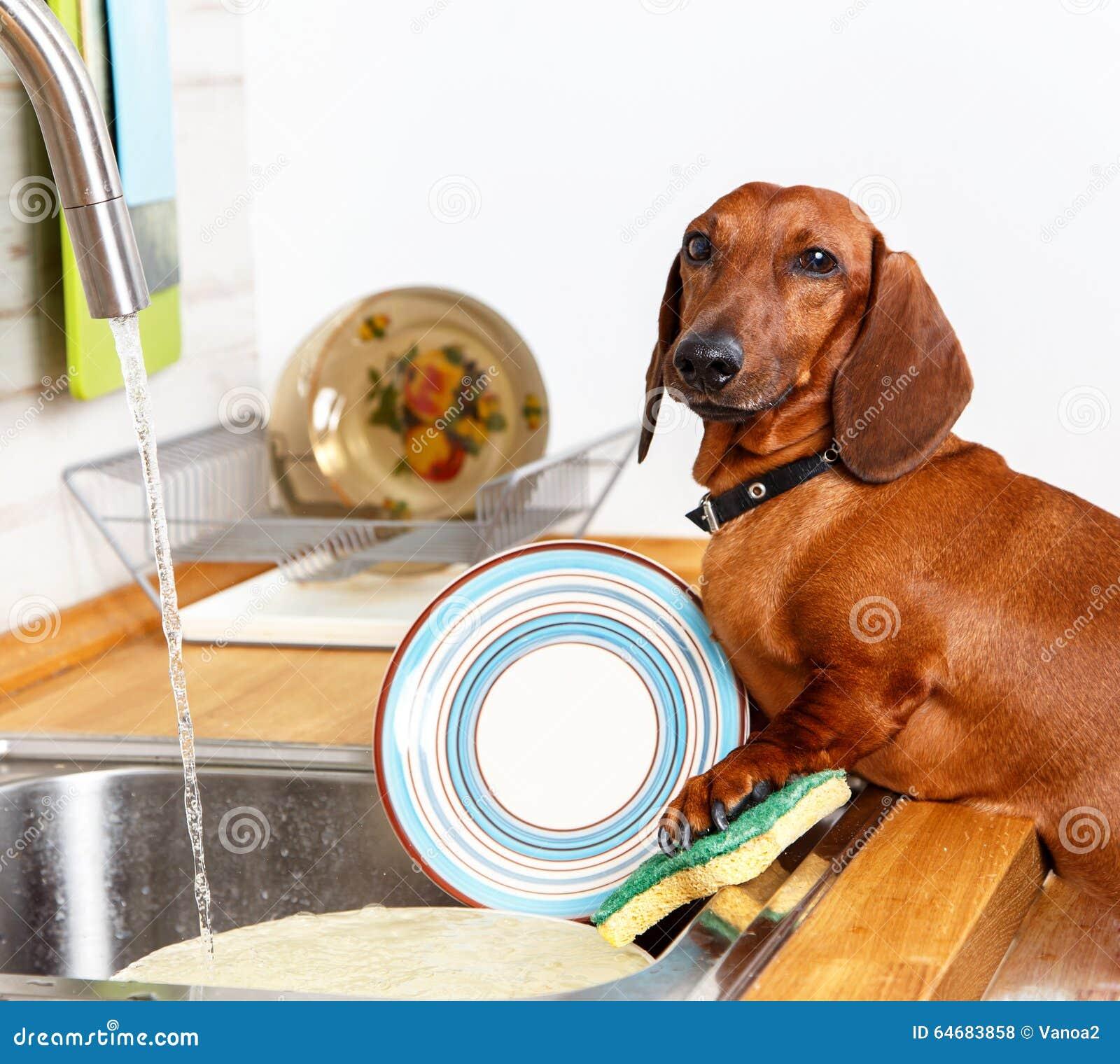 Favorit- hushållarbetsuppgifter av den unga hunden