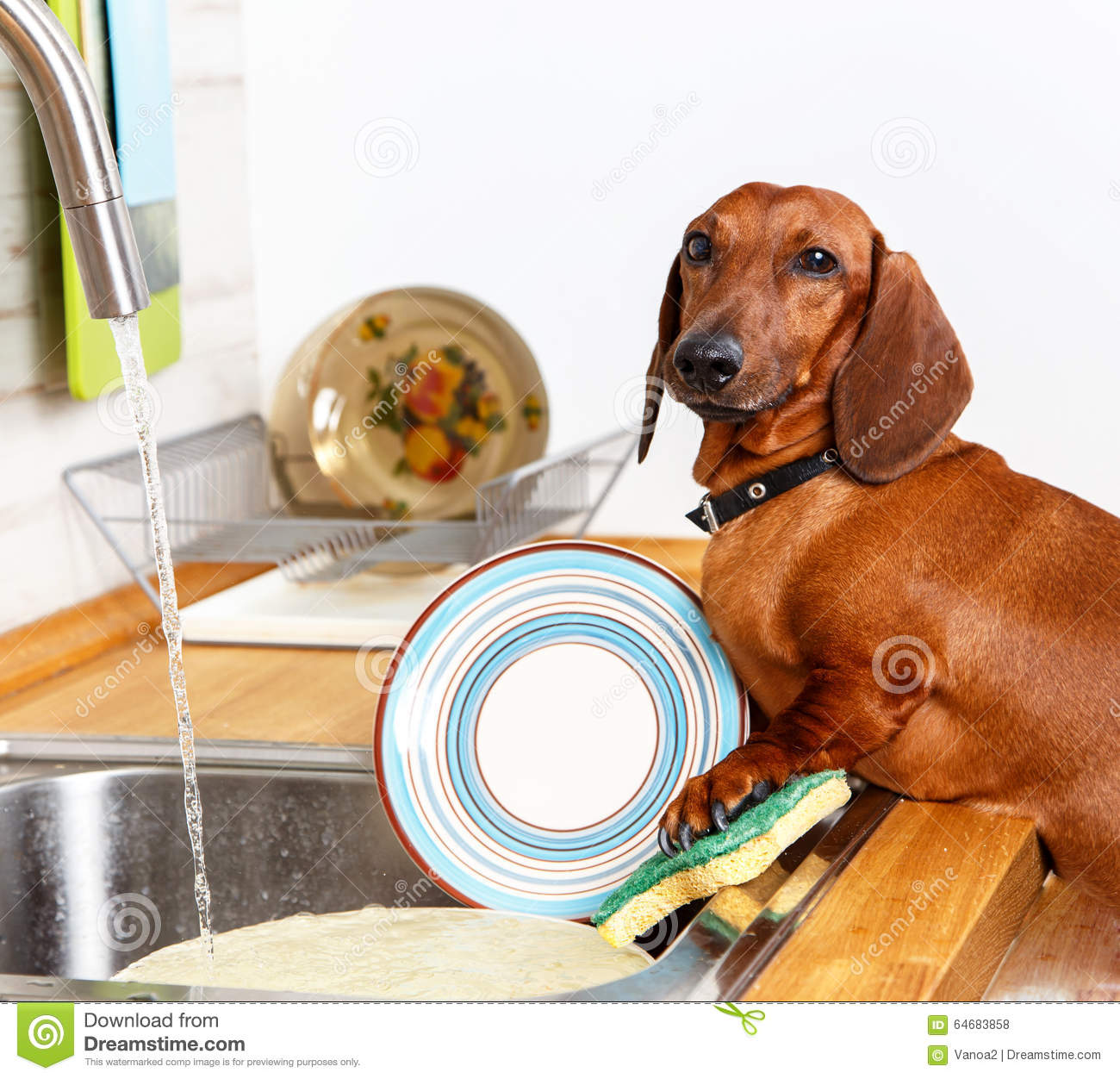 Favorite Household Duties Young Dog Stock Image