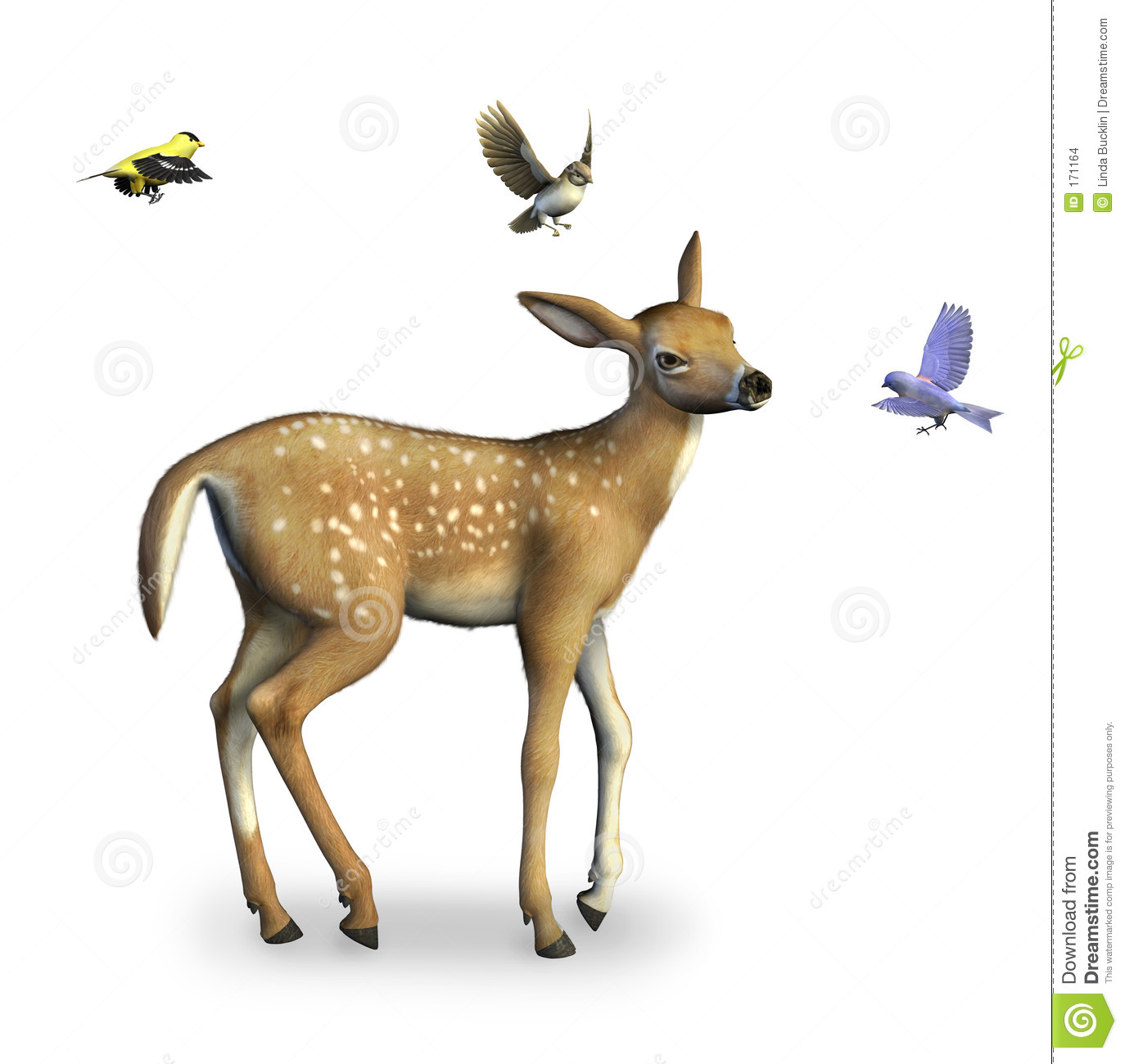 Fawn with Birds includes clipping path