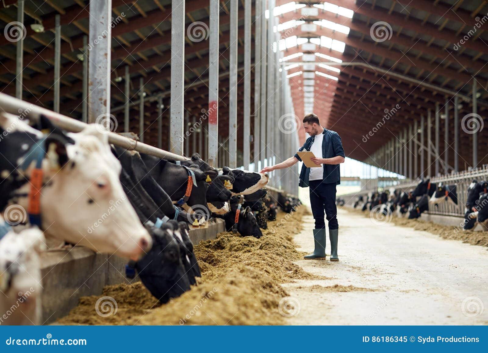 Fazendeiro com prancheta e vacas no estábulo na exploração agrícola